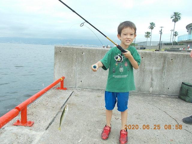 鳴尾 浜 釣果